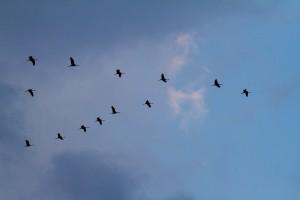 Kraanvogels 2013-6 copy
