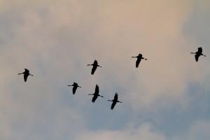 Kraanvogels 2013-7 copy