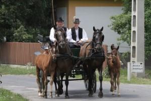 Paard en wagen 01